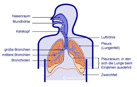 Asthma Patientenleitlinie [www.Patientenleitlinien.de] Gesundheit + ...